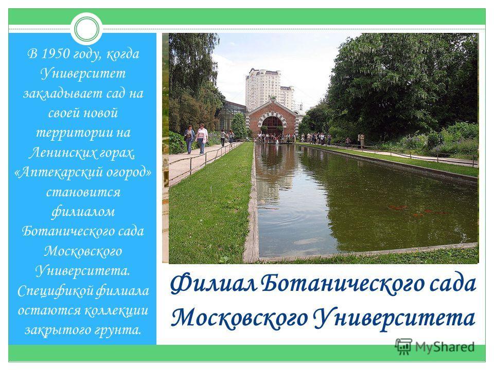 Филиал Ботанического сада Московского Университета В 1950 году, когда Университет закладывает сад на своей новой территории на Ленинских горах, «Аптекарский огород» становится филиалом Ботанического сада Московского Университета. Спецификой филиала о