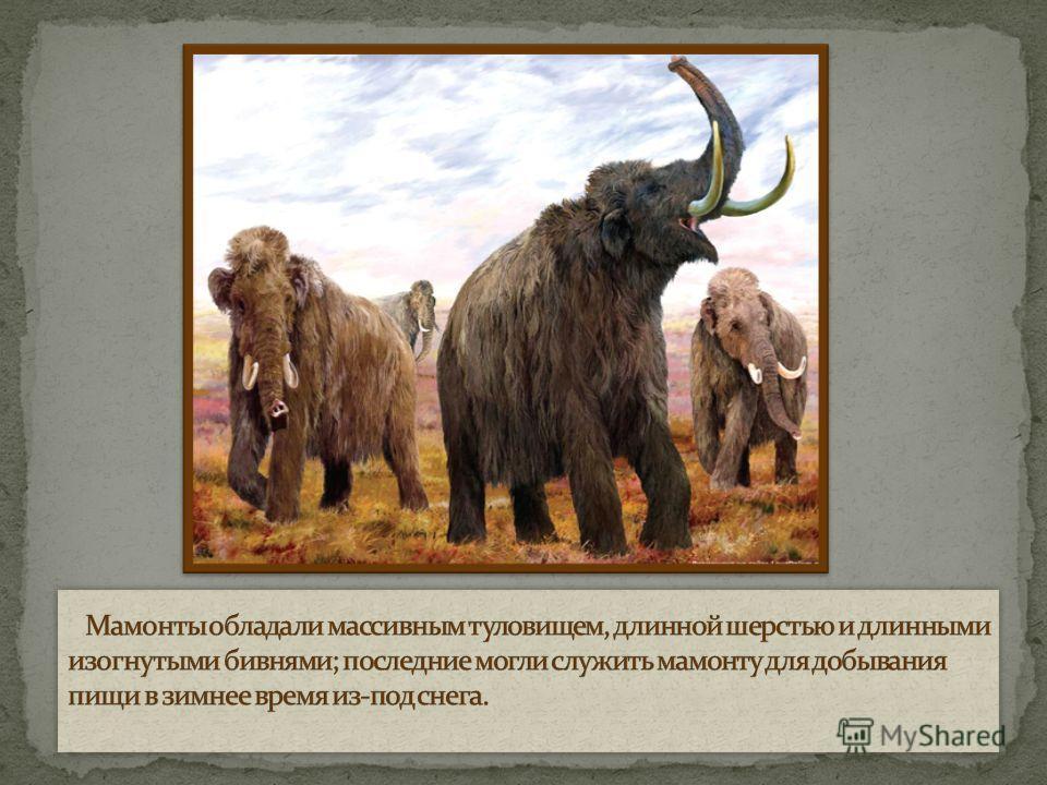 Ма́монты (лат. Mammuthus) вымерший род млекопитающих из семейства слоновых, живший в четвертичном периоде. Достигали высоты 5,5 метров и массы тела 1012 тонн.