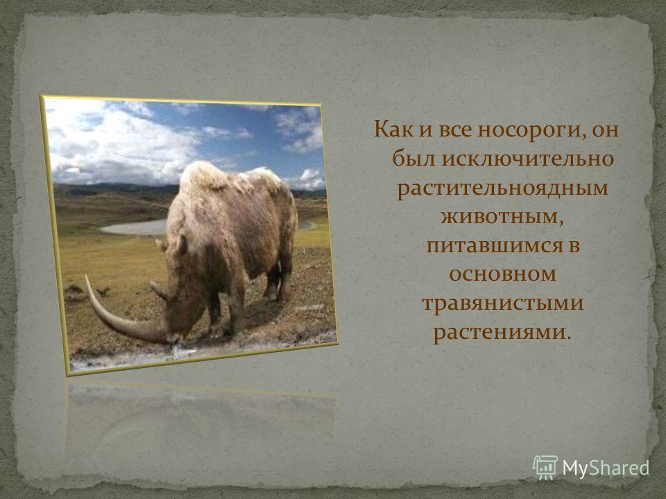 Шерстистый носорог по внешнему облику был в целом похож на современного носорога, однако несколько отличался телосложением и некоторыми деталями строения. Кроме того, как следует из названия, он был покрыт густой и длинной шерстью, чтобы приспособить