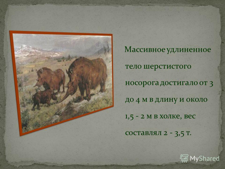 Шерстистый носорог известен не только по многочисленным находкам отдельных костей и скелетов, но и по наскальным рисункам древнего человека. Всё это позволяет с большой точностью реконструировать его внешний облик.