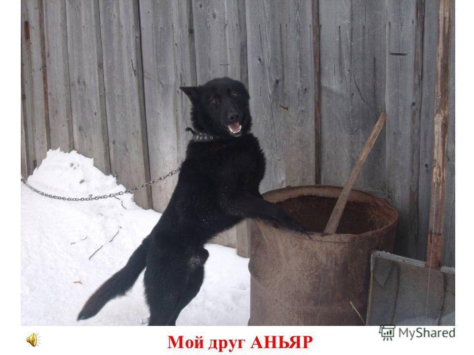 Мой друг АНЬЯР