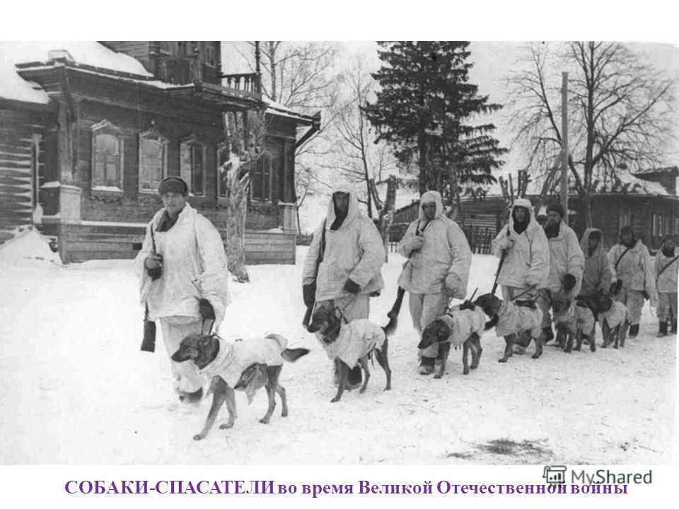 СОБАКИ-СПАСАТЕЛИ во время Великой Отечественной войны