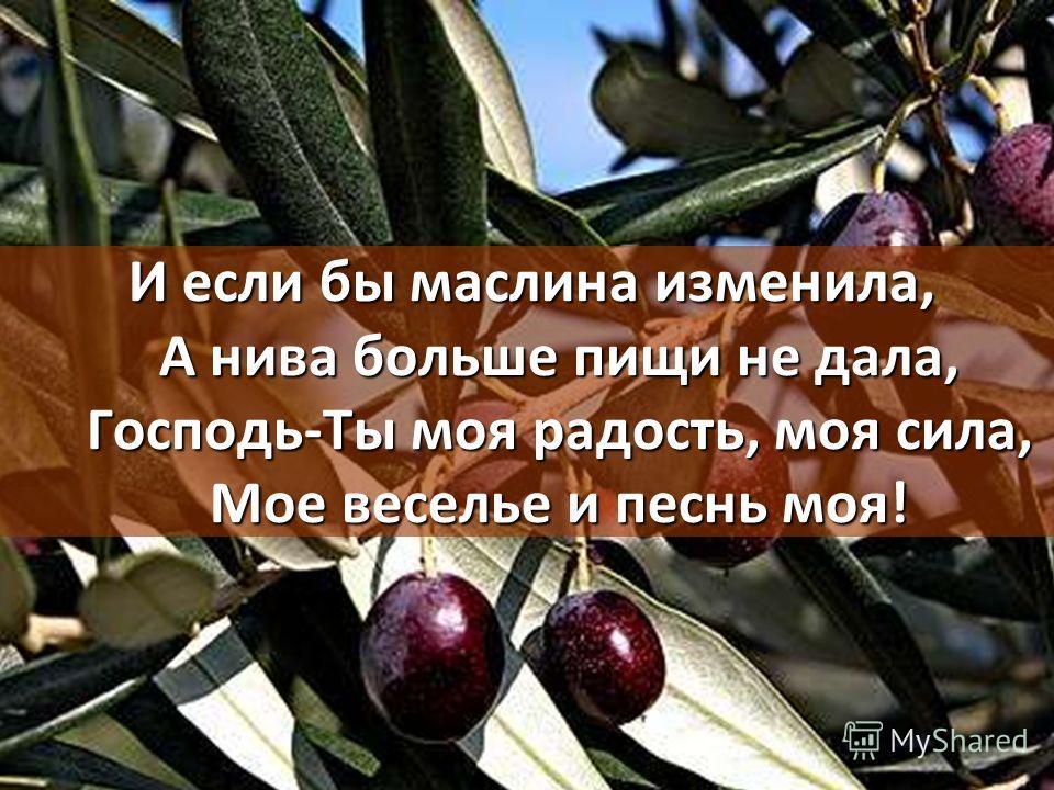 И если бы маслина изменила, А нива больше пищи не дала, Господь-Ты моя радость, моя сила, Мое веселье и песнь моя!
