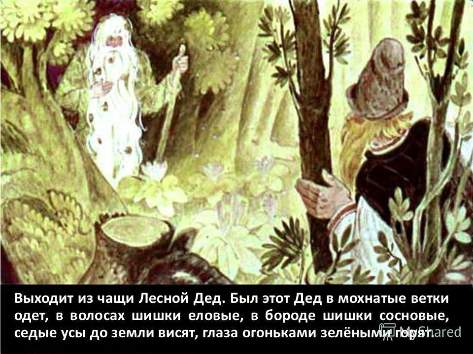 Выходит из чащи Лесной Дед. Был этот Дед в мохнатые ветки одет, в волосах шишки еловые, в бороде шишки сосновые, седые усы до земли висят, глаза огоньками зелёными горят.