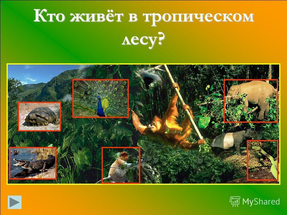 Кто живёт в тропическом лесу?