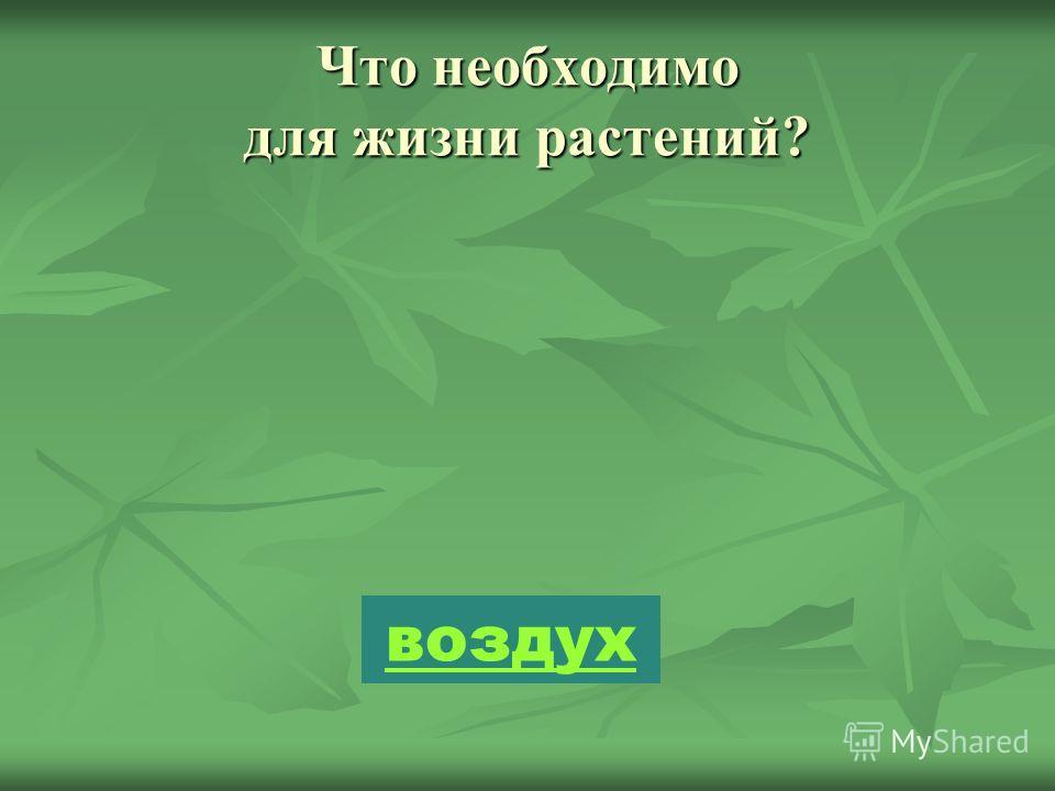 Что необходимо для жизни растений? воздух