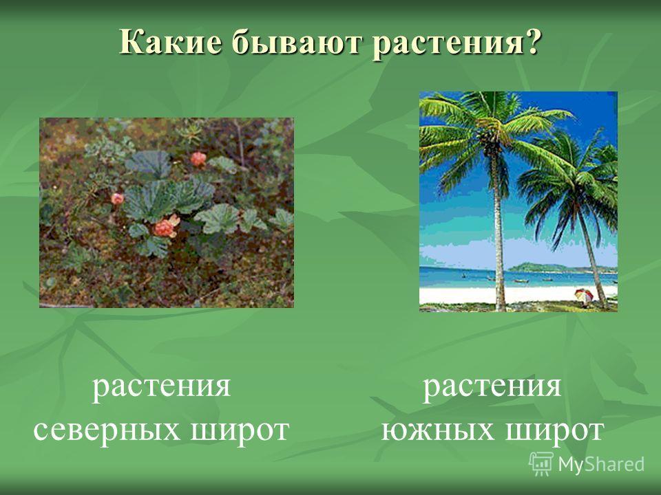 Какие бывают растения? растения северных широт растения южных широт