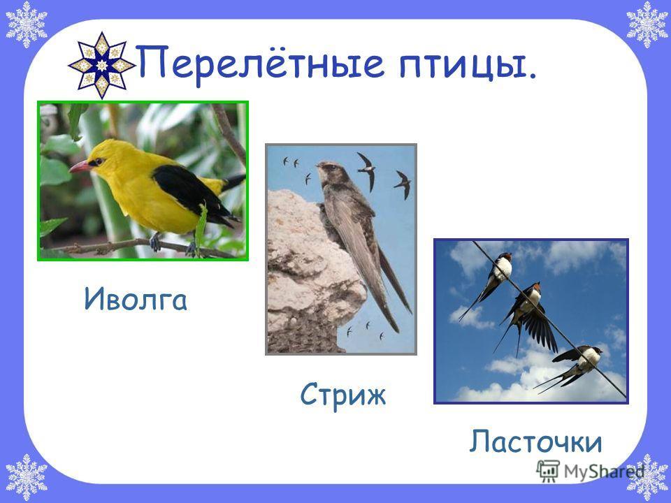Перелётные птицы. Стриж Ласточки Иволга