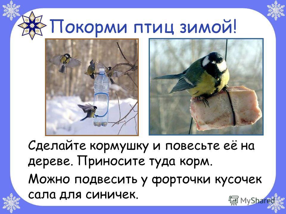 Покорми птиц зимой! Сделайте кормушку и повесьте её на дереве. Приносите туда корм. Можно подвесить у форточки кусочек сала для синичек.