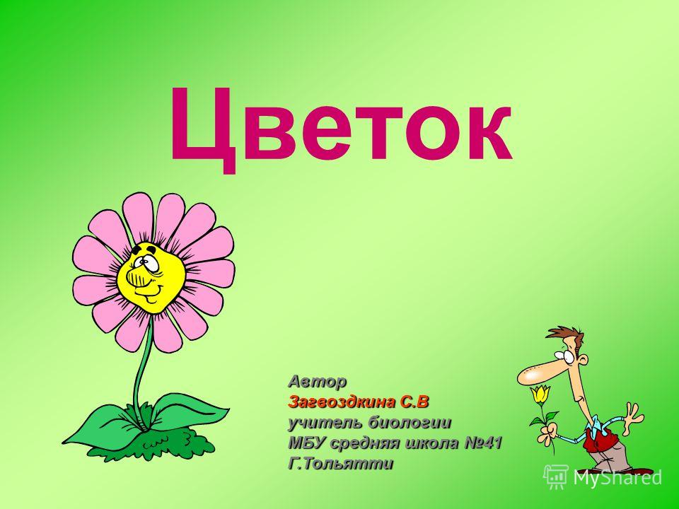Цветок Автор Загвоздкина С.В учитель биологии МБУ средняя школа 41 Г.Тольятти