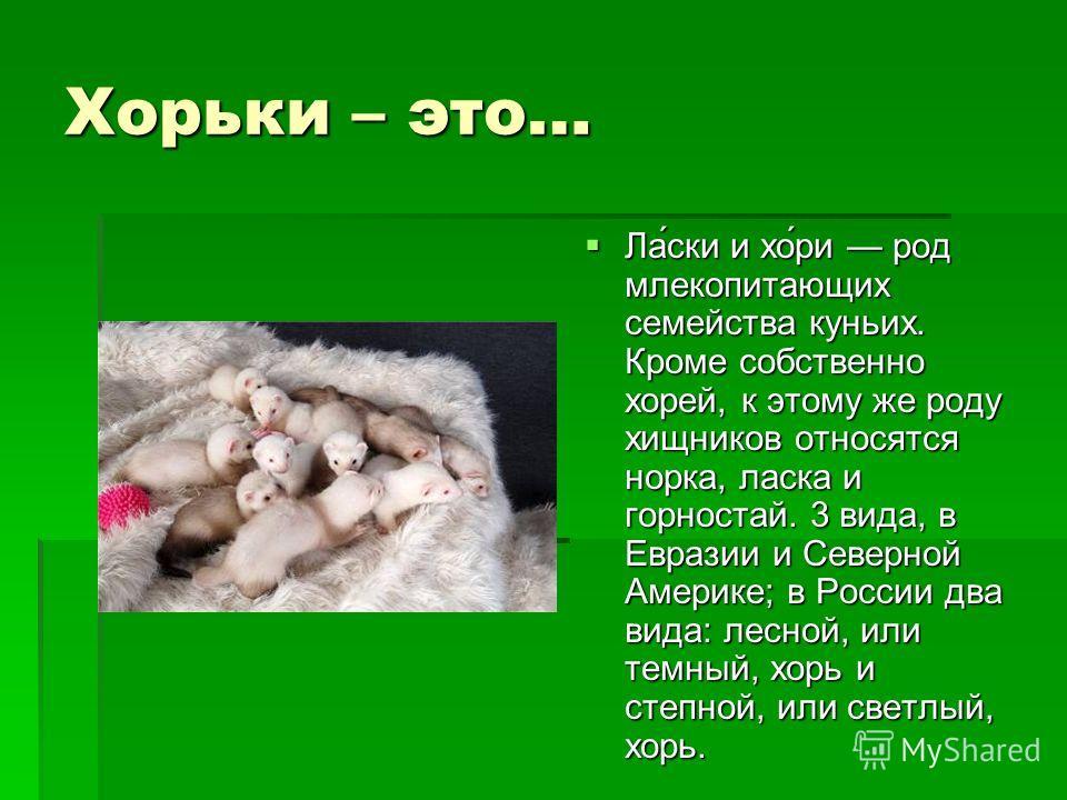 Хорьки – это… Ла́ски и хо́ри род млекопитающих семейства куньих. Кроме собственно хорей, к этому же роду хищников относятся норка, ласка и горностай. 3 вида, в Евразии и Северной Америке; в России два вида: лесной, или темный, хорь и степной, или све
