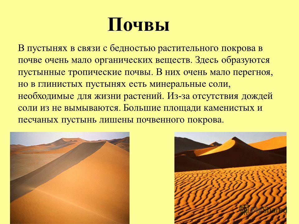 Почвы В пустынях в связи с бедностью растительного покрова в почве очень мало органических веществ. Здесь образуются пустынные тропические почвы. В них очень мало перегноя, но в глинистых пустынях есть минеральные соли, необходимые для жизни растений