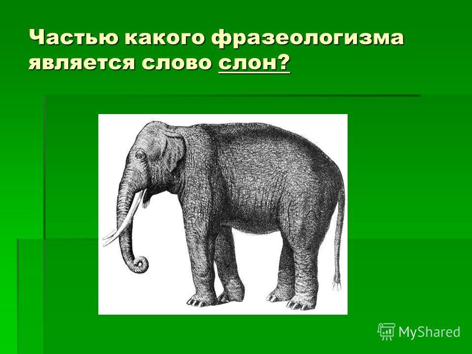 Частью какого фразеологизма является слово слон?