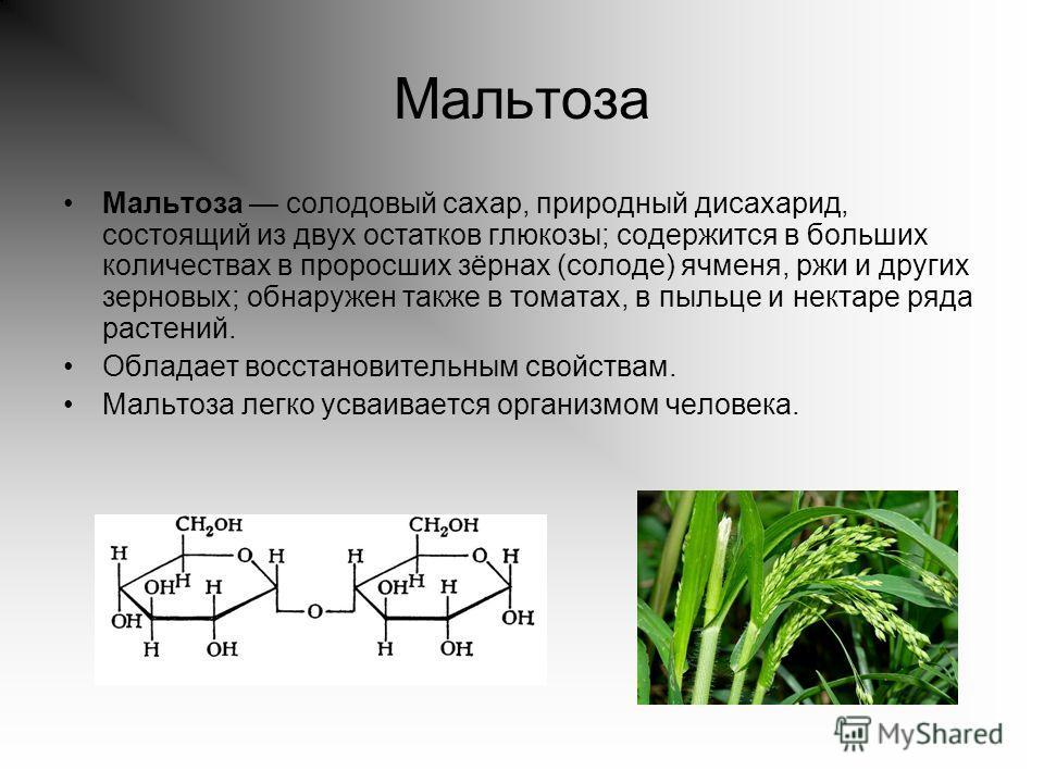 Мальтоза Мальтоза солодовый сахар, природный дисахарид, состоящий из двух остатков глюкозы; содержится в больших количествах в проросших зёрнах (солоде) ячменя, ржи и других зерновых; обнаружен также в томатах, в пыльце и нектаре ряда растений. Облад