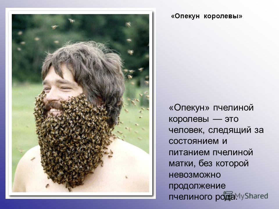 «Опекун королевы» «Опекун» пчелиной королевы это человек, следящий за состоянием и питанием пчелиной матки, без которой невозможно продолжение пчелиного рода.