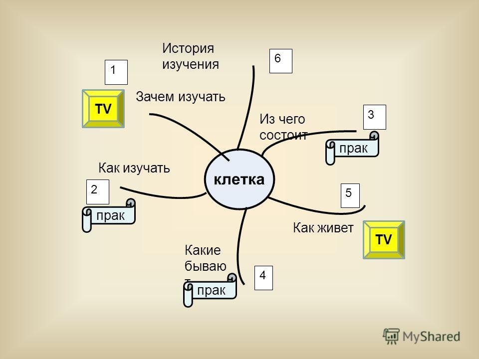 Из чего состоит Как живет Какие бываю т Как изучать Зачем изучать 1 3 4 5 2 6 прак TV История изучения