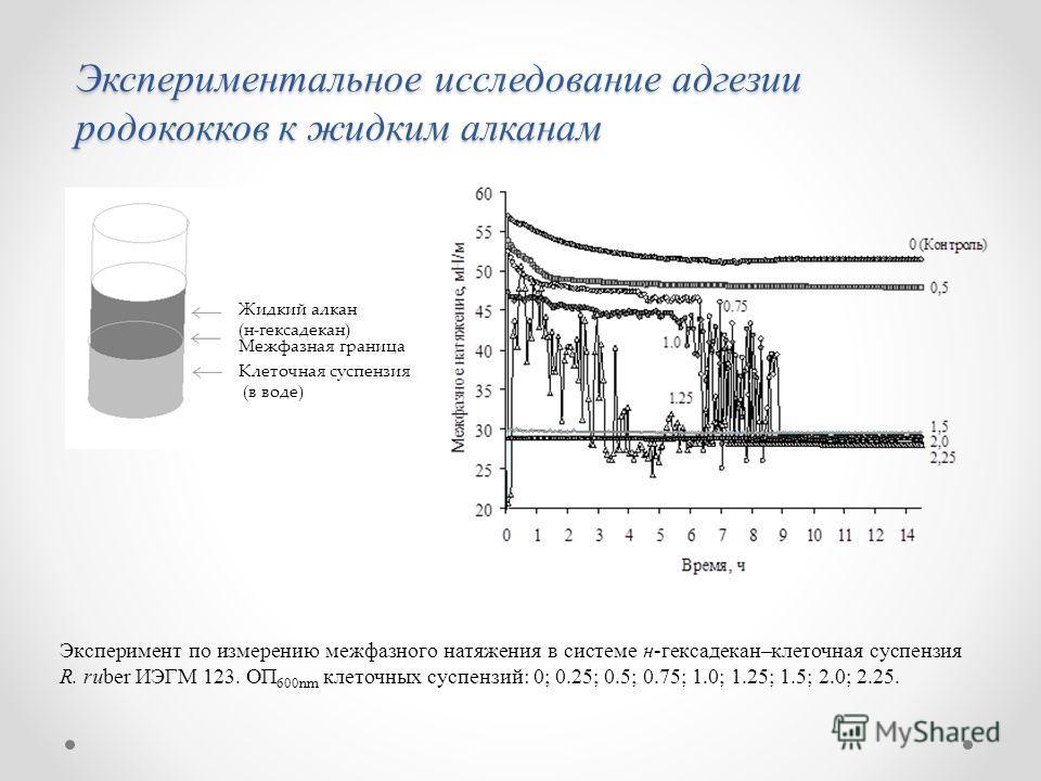 Клеточная суспензия (в воде) Жидкий алкан (н-гексадекан) Межфазная граница Экспериментальное исследование адгезии родококков к жидким алканам Эксперимент по измерению межфазного натяжения в системе н-гексадекан–клеточная суспензия R. ruber ИЭГМ 123.