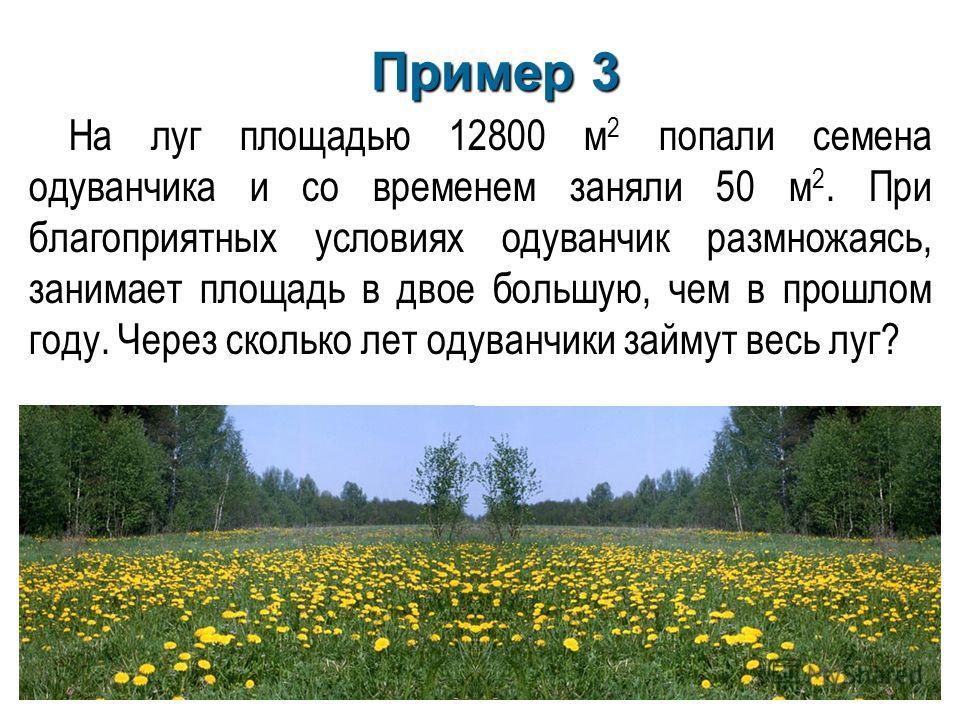 На луг площадью 12800 м 2 попали семена одуванчика и со временем заняли 50 м 2. При благоприятных условиях одуванчик размножаясь, занимает площадь в двое большую, чем в прошлом году. Через сколько лет одуванчики займут весь луг? Пример 3