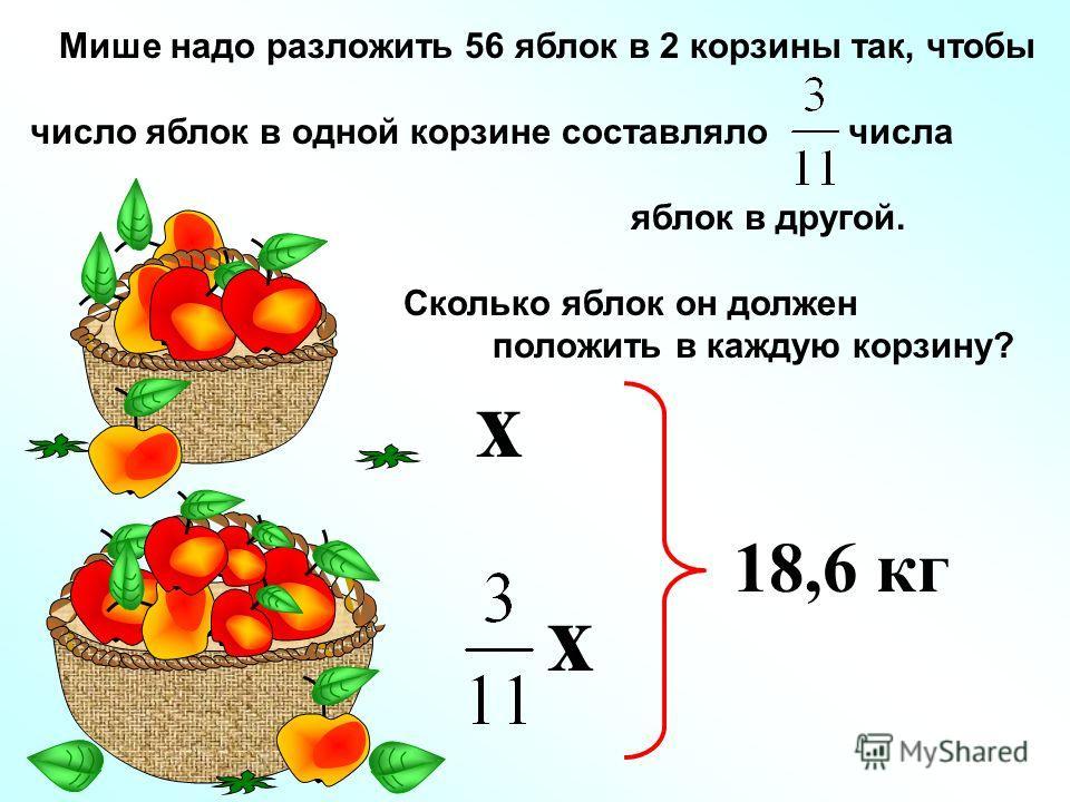 Мише надо разложить 56 яблок в 2 корзины так, чтобы число яблок в одной корзине составляло числа яблок в другой. Сколько яблок он должен положить в каждую корзину? х 18,6 кг х