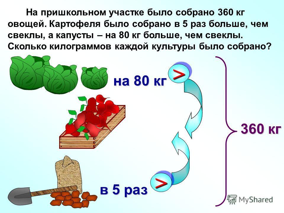На пришкольном участке было собрано 360 кг овощей. Картофеля было собрано в 5 раз больше, чем свеклы, а капусты – на 80 кг больше, чем свеклы. Сколько килограммов каждой культуры было собрано? >> в 5 раз в 5 раз >> на 80 кг на 80 кг 360 кг