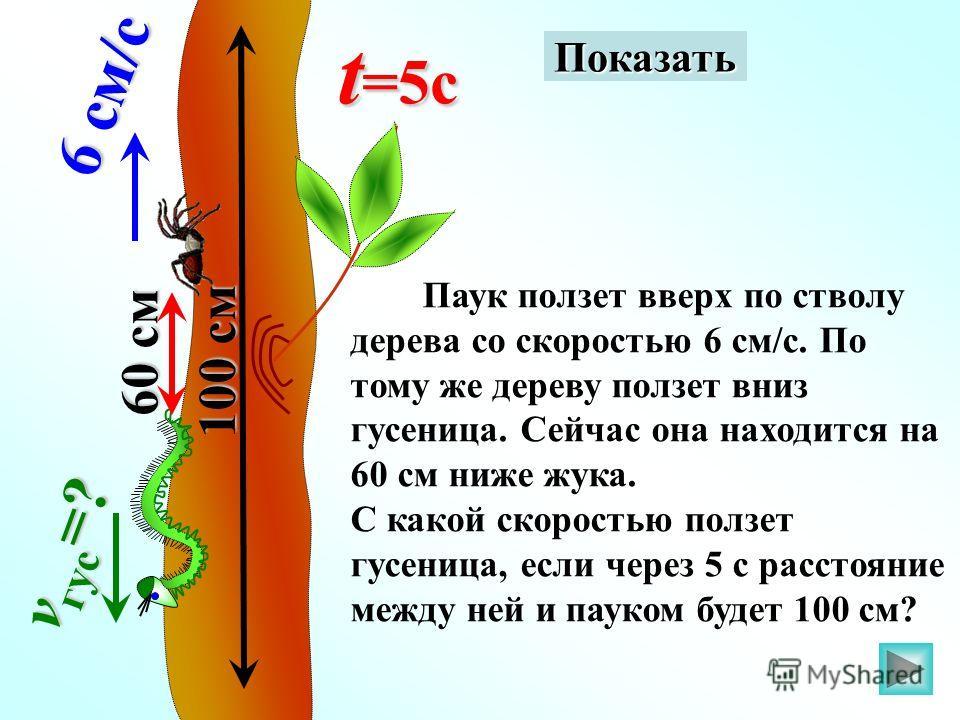 Паук ползет вверх по стволу дерева со скоростью 6 см/с. По тому же дереву ползет вниз гусеница. Сейчас она находится на 60 см ниже жука. С какой скоростью ползет гусеница, если через 5 с расстояние между ней и пауком будет 100 см? 6 см/с v гус =? 60