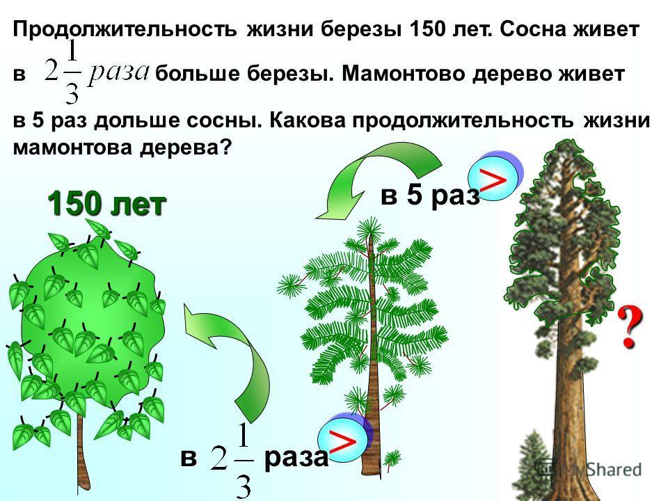 Продолжительность жизни березы 150 лет. Сосна живет в больше березы. Мамонтово дерево живет в 5 раз дольше сосны. Какова продолжительность жизни мамонтова дерева? 150 лет > > в раза > > в 5 раз ?