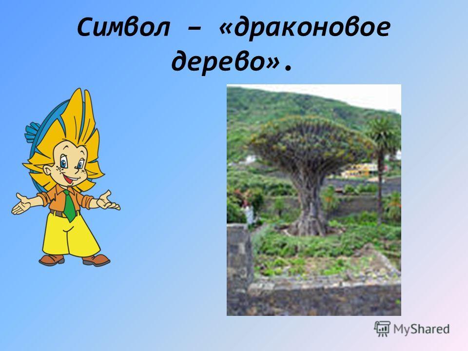 Символ – «драконовое дерево».