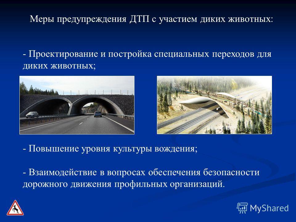 - Проектирование и постройка специальных переходов для диких животных; - Повышение уровня культуры вождения; - Взаимодействие в вопросах обеспечения безопасности дорожного движения профильных организаций. Меры предупреждения ДТП с участием диких живо