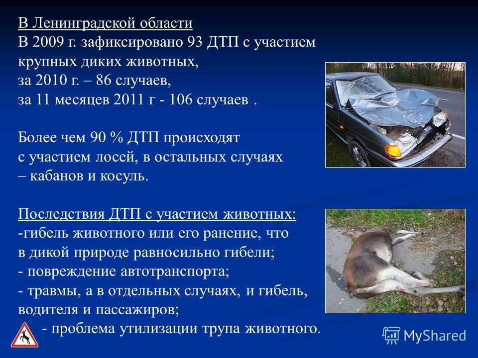 В Ленинградской области В 2009 г. зафиксировано 93 ДТП с участием крупных диких животных, за 2010 г. – 86 случаев, за 11 месяцев 2011 г - 106 случаев. Более чем 90 % ДТП происходят с участием лосей, в остальных случаях – кабанов и косуль. Последствия
