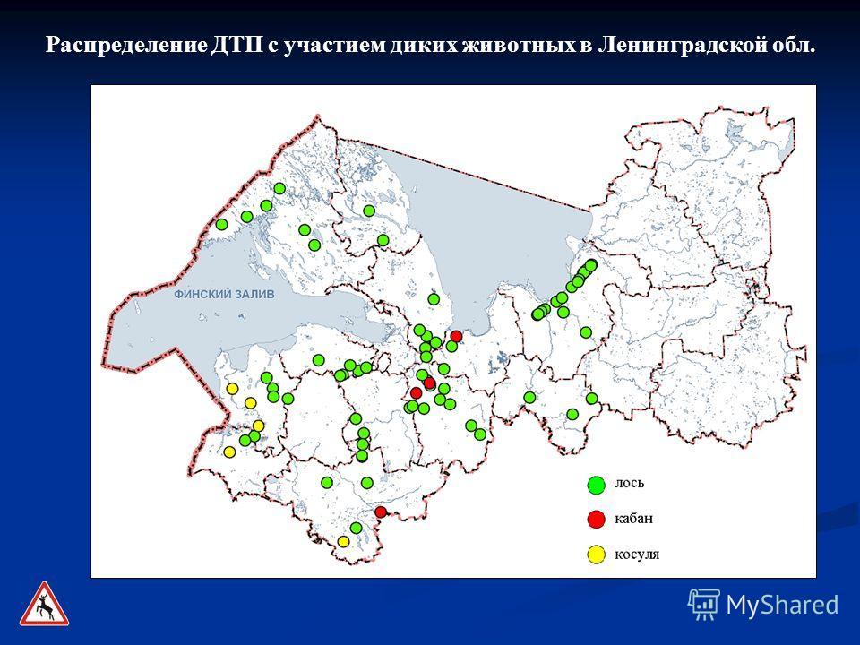 Распределение ДТП с участием диких животных в Ленинградской обл.