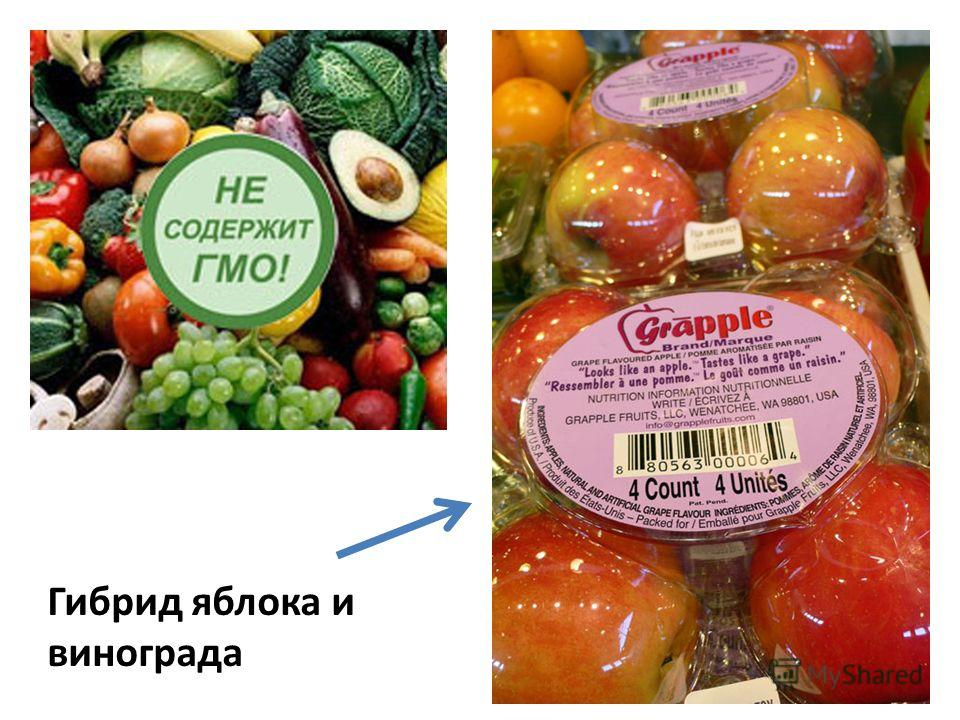 Гибрид яблока и винограда
