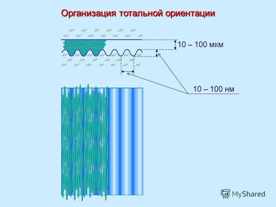 10 – 100 мкм 10 – 100 нм Организация тотальной ориентации