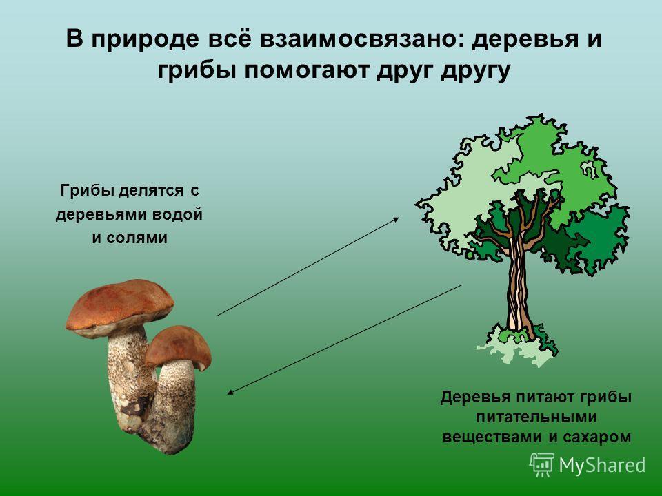 Где какие грибы искать Берёза – подберёзовикБерёза – подберёзовик Дуб (в бору) – боровик (белый гриб)Дуб (в бору) – боровик (белый гриб) Осина – подосиновикОсина – подосиновик Сосны – маслята,,,Сосны – маслята,,, Старые пни - опятаСтарые пни - опята