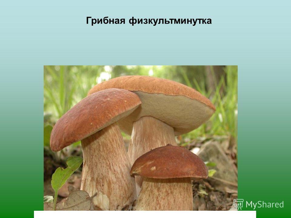 В природе всё взаимосвязано: деревья и грибы помогают друг другу Грибы делятся с деревьями водой и солями Деревья питают грибы питательными веществами и сахаром