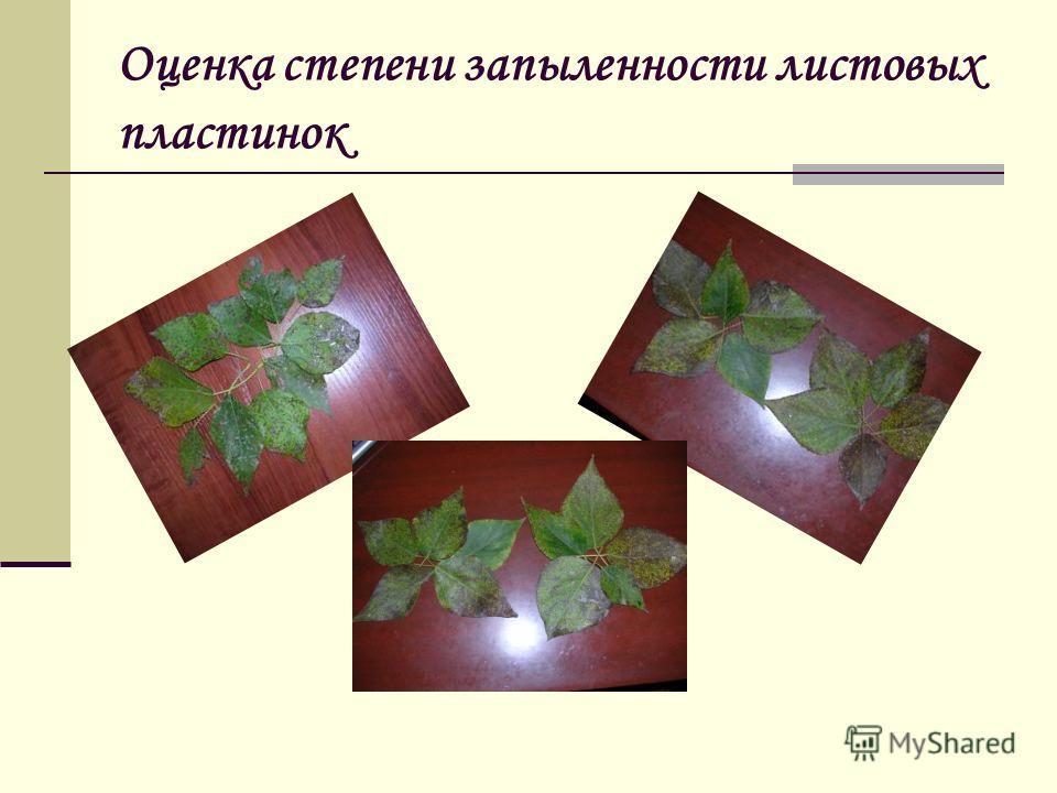Оценка степени запыленности листовых пластинок