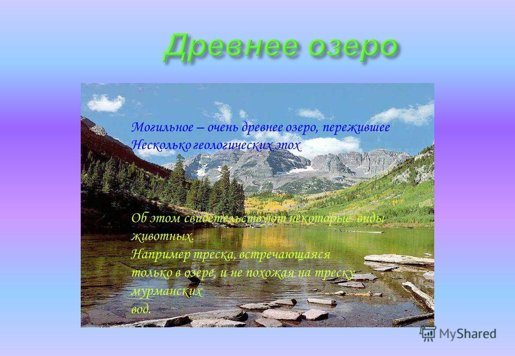 Могильное – очень древнее озеро, пережившее Несколько геологических эпох. Об этом свидетельствуют некоторые виды животных. Например треска, встречающаяся только в озере, и не похожая на треску мурманских вод.