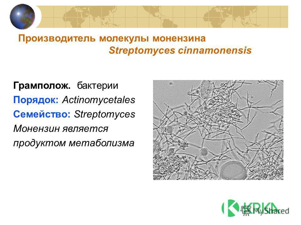 Производитель молекулы монензина Streptomyces cinnamonensis Грамполож. бактерии Порядок: Actinomycetales Семейство: Streptomyces Монензин является продуктом метаболизма