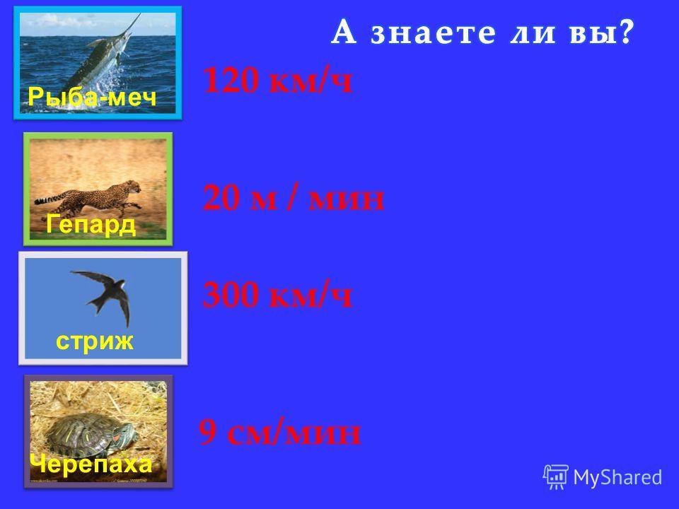 Рыба-меч Гепард стриж Черепаха 120 км/ч 20 м / мин 9 см/мин 300 км/ч