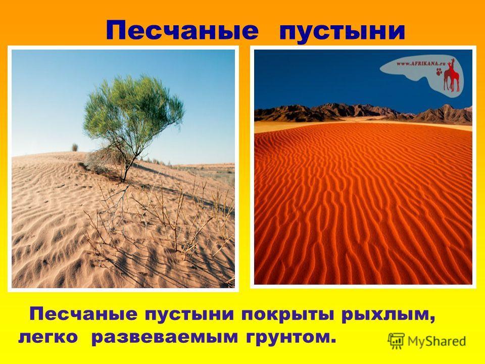Песчаные пустыни Песчаные пустыни покрыты рыхлым, легко развеваемым грунтом.