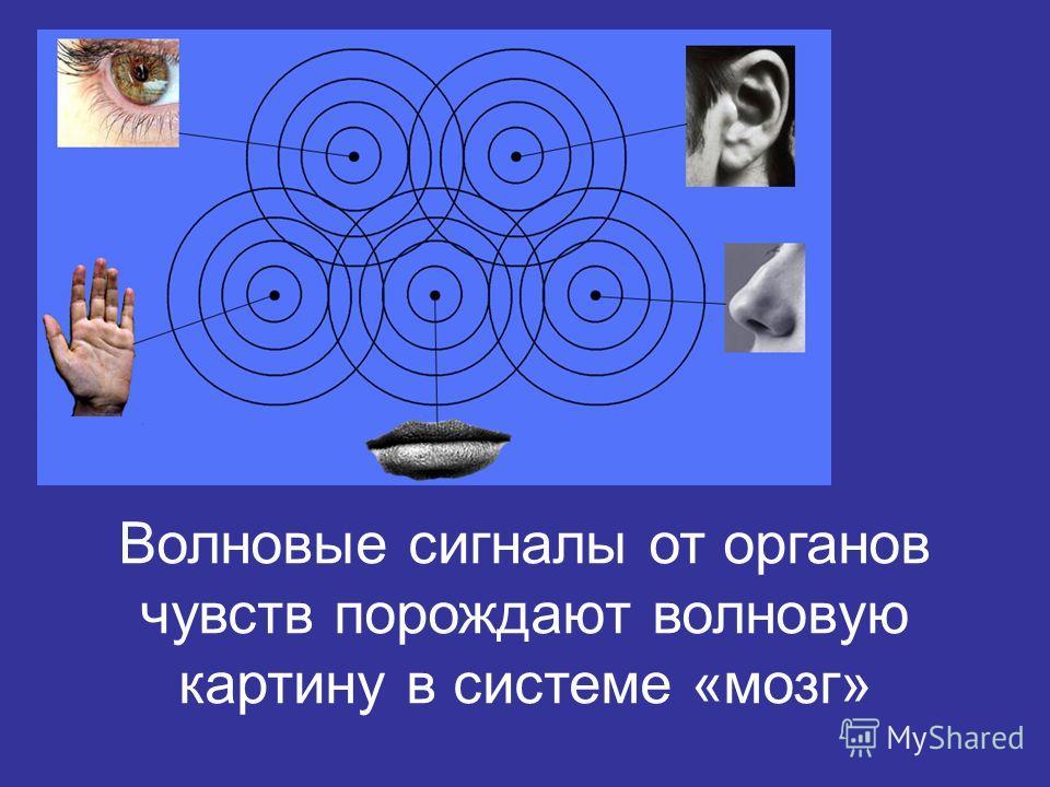 Волновые сигналы от органов чувств порождают волновую картину в системе «мозг»