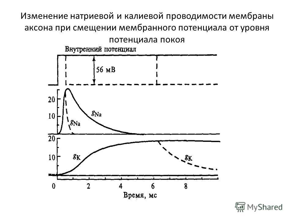 Изменение натриевой и калиевой проводимости мембраны аксона при смещении мембранного потенциала от уровня потенциала покоя