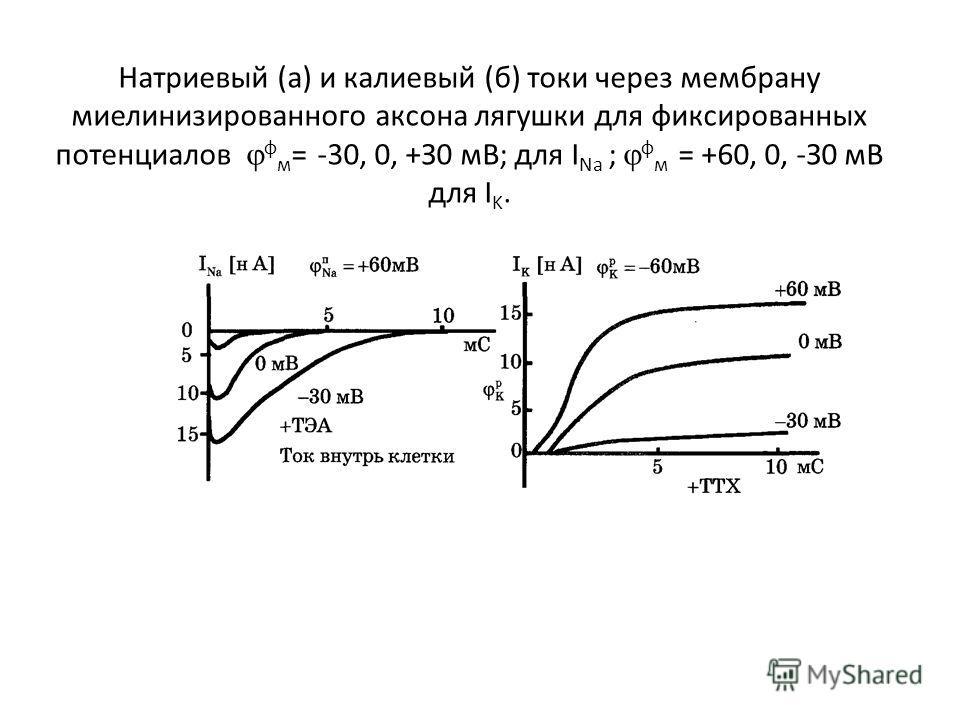 Натриевый (а) и калиевый (б) токи через мембрану миелинизированного аксона лягушки для фиксированных потенциалов ф м = -30, 0, +З0 мВ; для I Na ; ф м = +60, 0, -З0 мВ для I K.