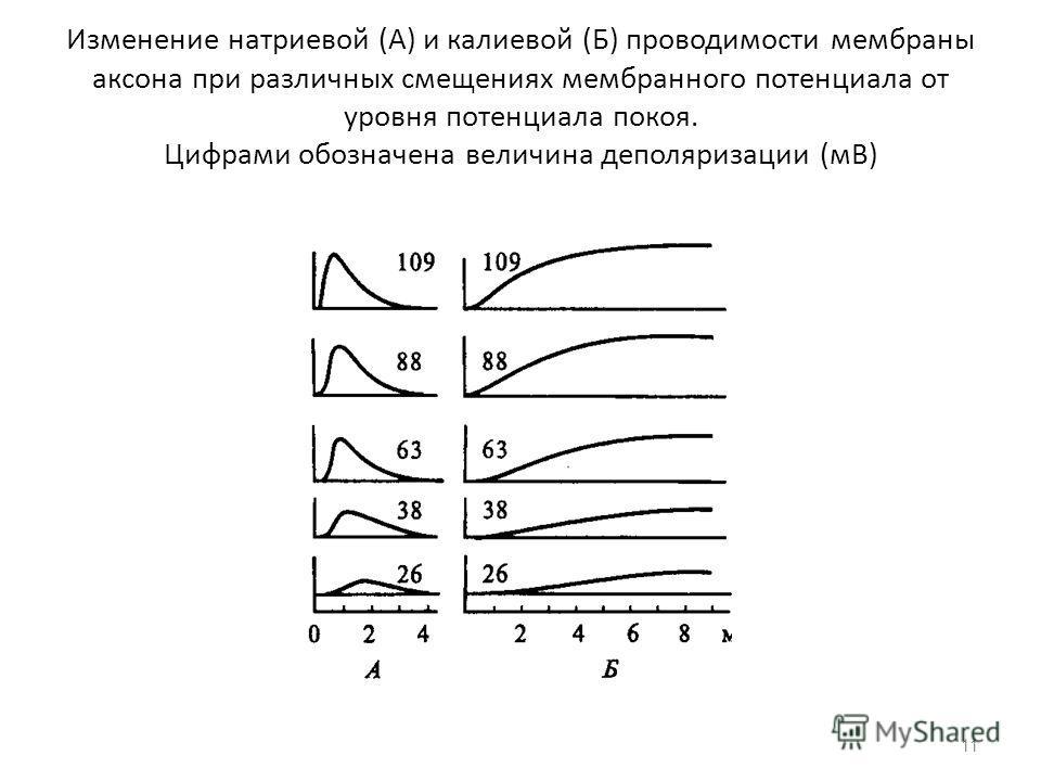 Изменение натриевой (А) и калиевой (Б) проводимости мембраны аксона при различных смещениях мембранного потенциала от уровня потенциала покоя. Цифрами обозначена величина деполяризации (мВ) 11