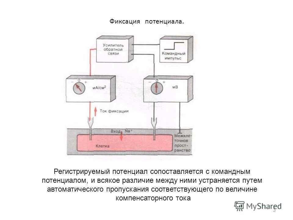 Фиксация потенциала. 3 Регистрируемый потенциал сопоставляется с командным потенциалом, и всякое различие между ними устраняется путем автоматического пропускания соответствующего по величине компенсаторного тока
