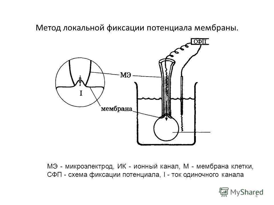 Метод локальной фиксации потенциала мембраны. 4 МЭ - микроэлектрод, ИК - ионный канал, М - мембрана клетки, СФП - схема фиксации потенциала, I - ток одиночного канала