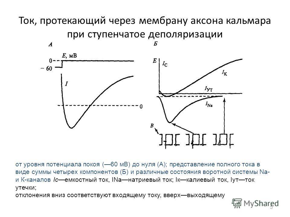 уровня потенциала покоя (