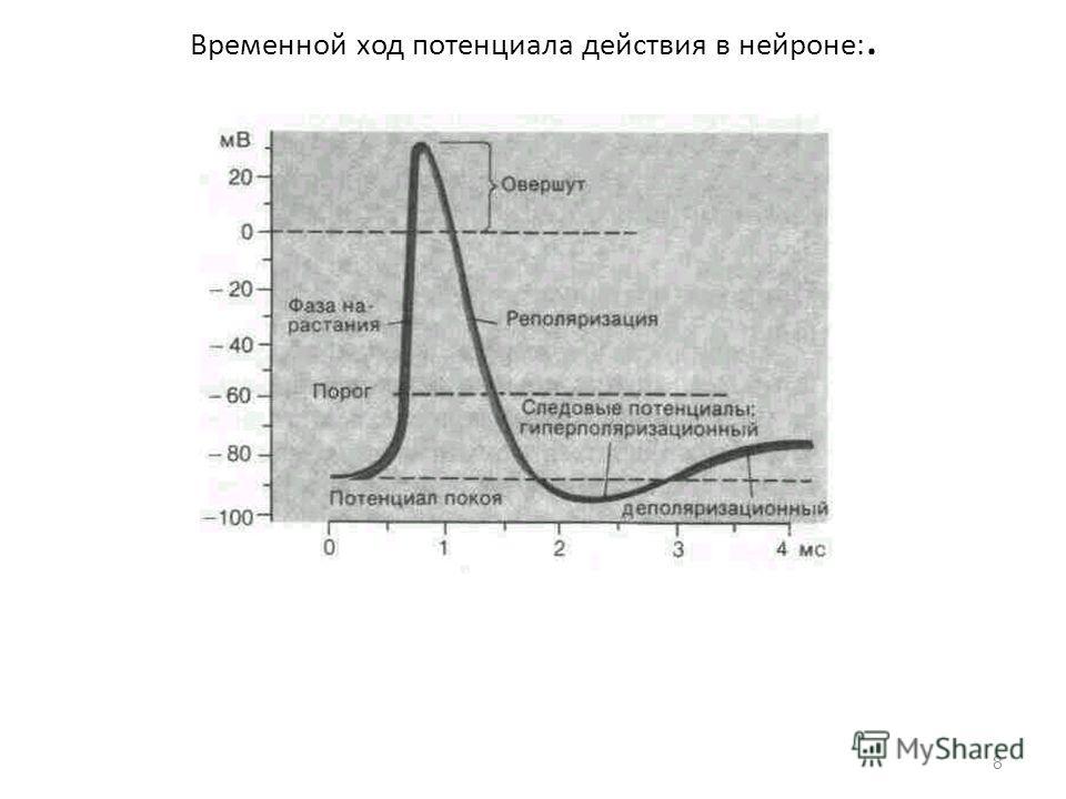 Временной ход потенциала действия в нейроне:. 8