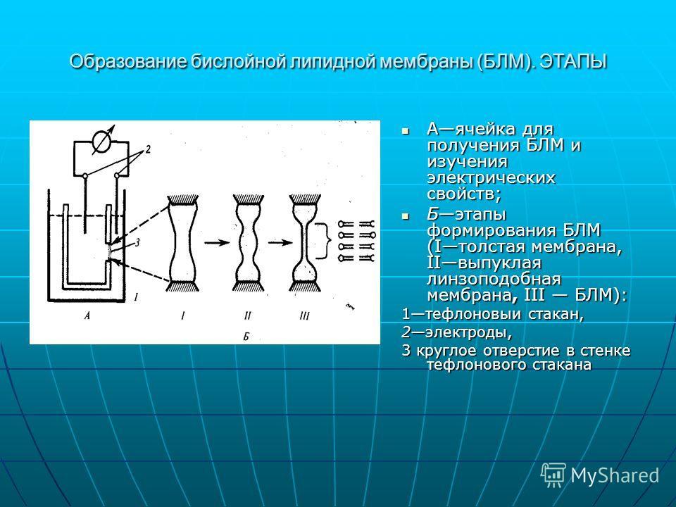 Образование бислойной липидной мембраны (БЛМ). ЭТАПЫ Аячейка для получения БЛМ и изучения электрических свойств; Аячейка для получения БЛМ и изучения электрических свойств; Бэтапы формирования БЛМ (Iтолстая мембрана, IIвыпуклая линзоподобная мембрана