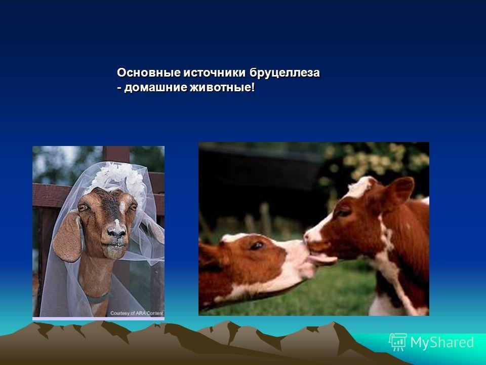 Основные источники бруцеллеза - домашние животные!