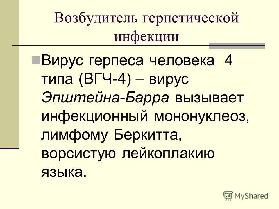 Возбудитель герпетической инфекции Вирус герпеса человека 4 типа (ВГЧ-4) – вирус Эпштейна-Барра вызывает инфекционный мононуклеоз, лимфому Беркитта, ворсистую лейкоплакию языка.